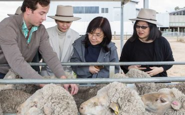 A fibre of success: Celebration of five decades of Australian wool trade to China