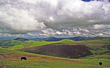 photo of two of yak grazing on grassland in eastern tibet, Kham, china, with grasslands, mountains and cloudy sky in background