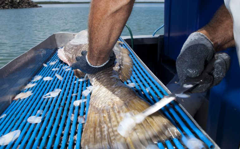 Australia's fishers call for recognition on World Fisheries