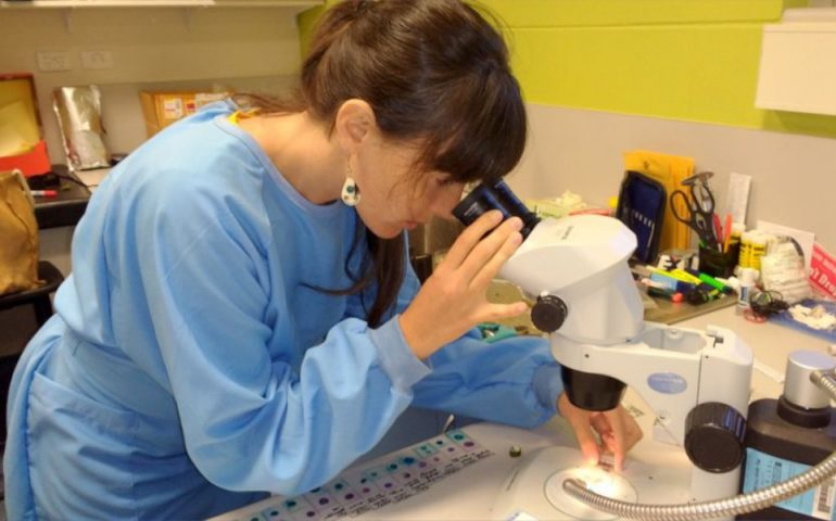 Dr Deborah Apgaua studying samples from trees subject to artificial drought.