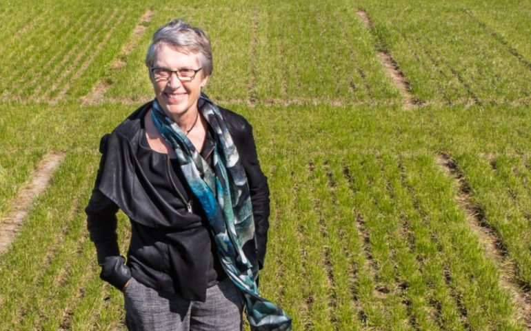 Emerita Professor Paula Jameson says Aotearoa New Zealand legislation needs to urgently catch up to other countries to gain the benefits of gene editing.