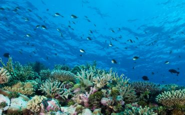 Reef-pic