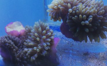 Anemones fight back on climate change