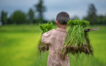 child labour agriculture stock image