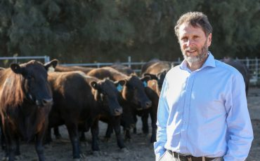 Potential for reduced methane from cows