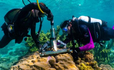 Research aims to preserve the future of Ningaloo reef corals