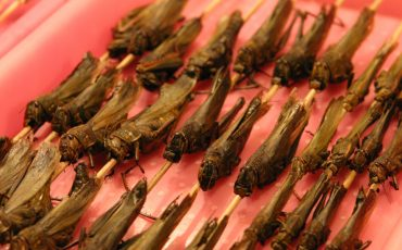 insects skewers food stock image