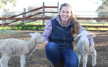 Sheep producers needed for online survey aimed at boosting lamb survival