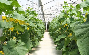 Crop it like it's hot – greenhouses to boost north's high-value produce