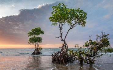 Mapping climate change using historical mangrove records