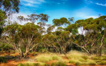 'Uncontested lands' could help Australia meet its Sustainable Development Goals