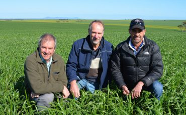 SAGIT project manager Malcolm Buckby, scientific officer Allan Mayfield and chairman Michael Treloar at the University of Adelaide trial 'Growing durum demand in SA: gross margin sensitivity analysis trials', run by Dr Jason Able on the Wilksch's property at Yeelanna.