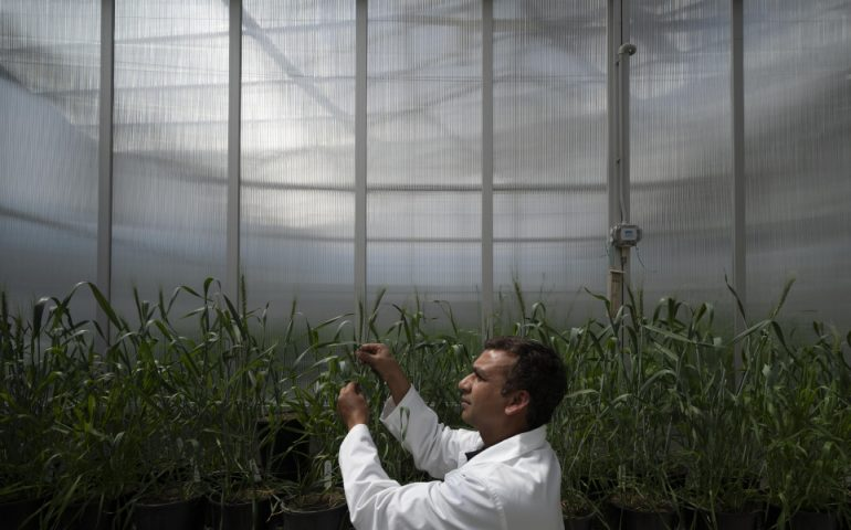 Dr Arun Yadav from the ANU Research School of Biology, ARC Centre of Excellence in Plant Energy Biology.