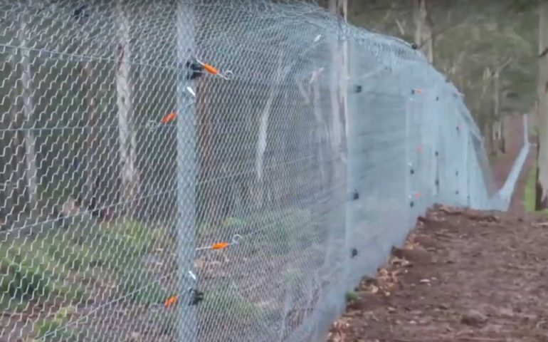waratah fencing video image december 2019 tf