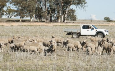Carbon Accounting Workshop for Sheep Producers - sheep & ute