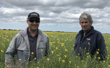 Victorian grower one of the first in Australia to grow TruFlex-triazine canola