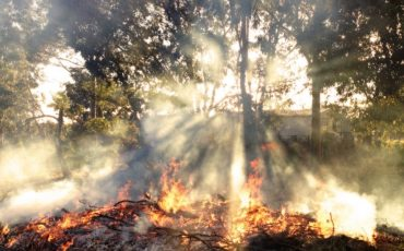 Scientists-study-impact-on-plant-species-from-a-bushfire_16x10crop