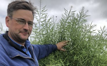 Farmer makes $3600/ha with graze and grain canola