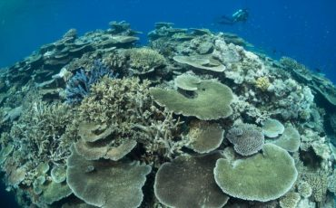 Declining oxygen availability may be amplifying coral bleaching. Photo by Juergen Freund