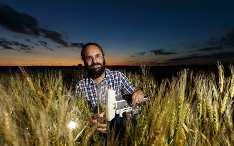 Harkamal Walia measures the carbon being expired by a head of wheat. Walia's research involves measuring the amount of energy a plant uses at night and the relationship how increasing temperatures forces plants to spend less energy producing grain. June 26, 2018. Photo by Craig Chandler / University Communication.