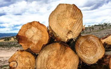 forestry-logs stock image