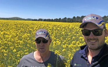 Tourello farmer grows monster canola crop