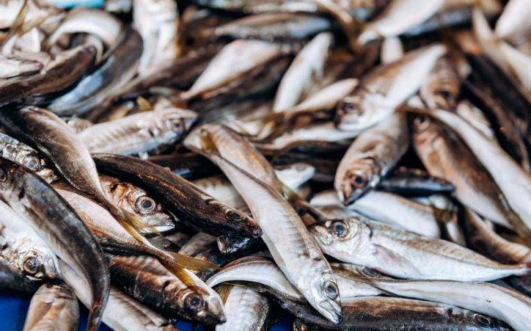 anchovies stock image