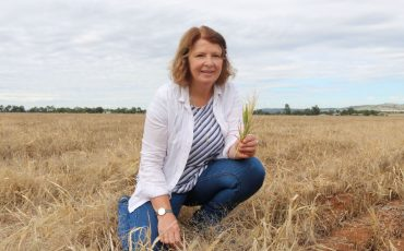 Research project on novel weed management identifies tactics for mixed farming systems
