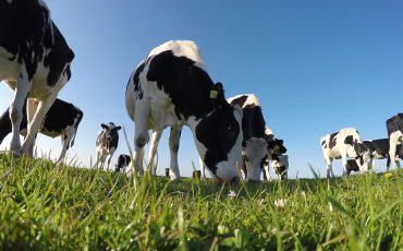 One-third of nitrogen emissions come from livestock sector