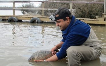 Carpe diem! Discovery of mystery carp abnormality creates opportunities