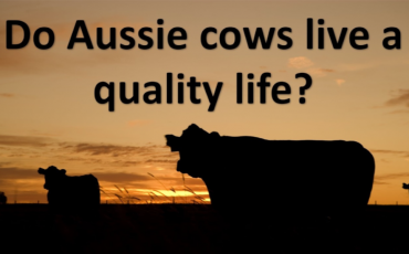 quality of life in beef cattle