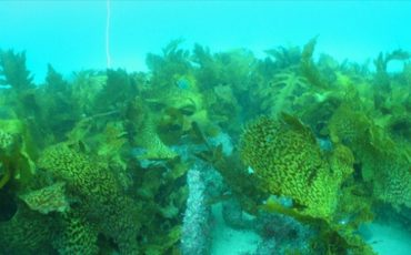 Fish reef domes a boon for the environment and recreational fishing