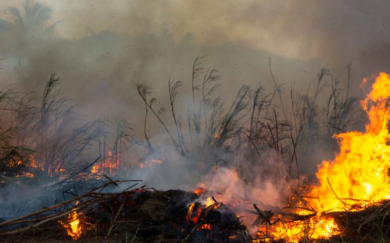 Global impact of wildfires
