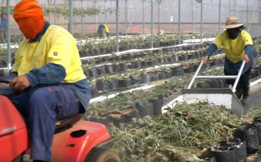 disinfecting greenhouses