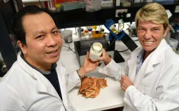 Seafood shells shape up as new food source