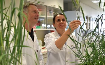 The keys to a major boost for hybrid wheat breeding