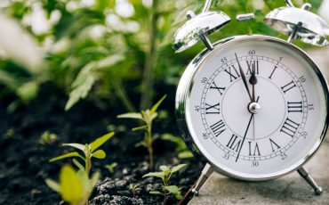 Plant clock could be the key to producing more food for the world