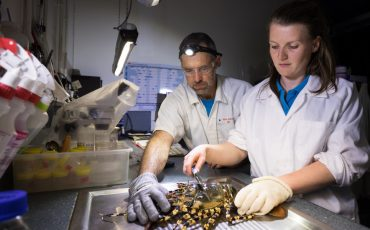 New research hub to position Australia as world leader in sustainable onshore lobster aquaculture