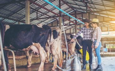 Lincoln University Dairy Farm launches new dairy sector research