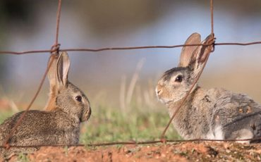 Managing feral animals can help Australia's transition to net zero emissions
